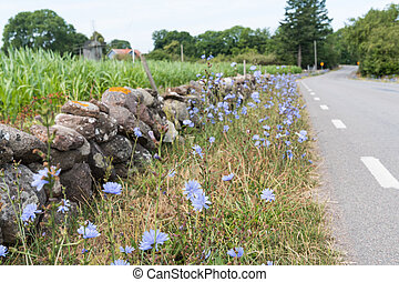 Beautiful roadside with blue flowers