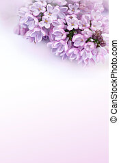 Beautiful, romantic background with lilac flowers