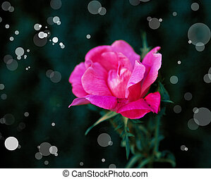 beautiful romantic background with red pink roses, petals,...