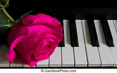 Beautiful rose on piano keys. Romance, celebration, postcard. Mother's day, Birthday, March 8, Valentine's day. Attention, Date, Love, Art.