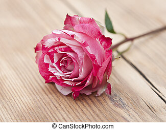 Beautiful rose on wooden background
