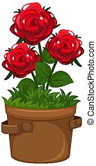 Beautiful roses in clay pot on white background