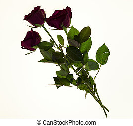 Beautiful roses in the bouquet, background for wedding cards, greeting card for birthday.