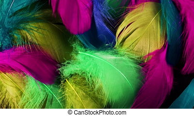 Beautiful rotating background of colorful tropical birds ...