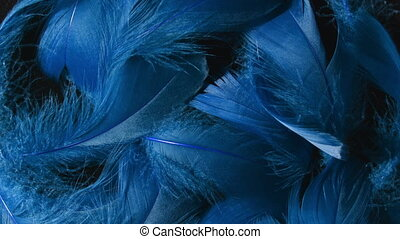 Beautiful rotating background of deep blue tropical birds feathers. Bird natural pattern. Close-up top view. Abstract rotating footage