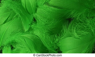 Beautiful rotating background of fresh green tropical birds ...