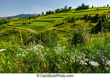 path along the agricultural fields with haystacks -...