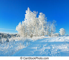 rural winter landscape a with blue sky, a field and forest