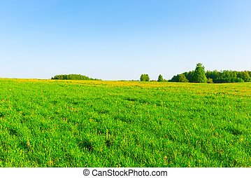 beautiful Russian field and cloudless sky