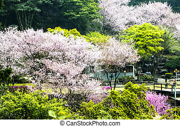Beautiful Sakura place in Taiwan