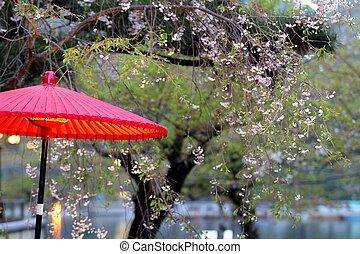 Beautiful sakura place