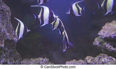 Beautiful saltwater aquarium with corals tropical fish -...