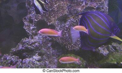 Beautiful saltwater aquarium with corals tropical fish -...