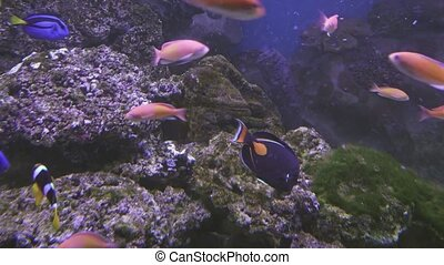 Beautiful saltwater aquarium with corals tropical fish stock...