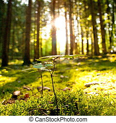 Beautiful scenery and sunbeams in the forest