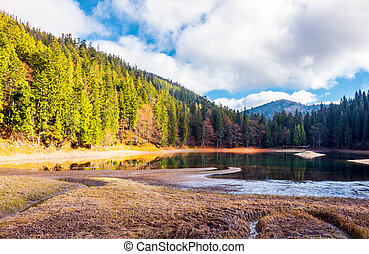 beautiful scenery around the Synevyr lake. tall trees around...