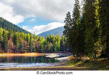beautiful scenery around the Synevyr lake. tall trees around...