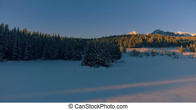Pine trees on snow covered mountain slope 4k - Beautiful ...