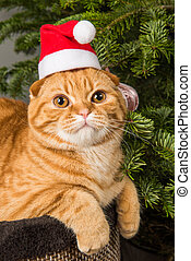 Beautiful Scottish Fold red cat in santa hat near Christmas tree
