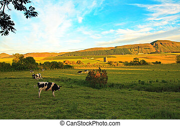 Beautiful Scottish landscape with cows