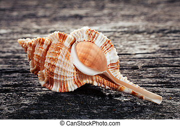 sea shell on wooden background