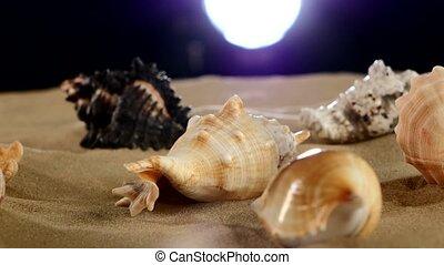 Beautiful sea shellsand starfish on beach sand, black, back light,  rotation
