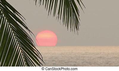 beautiful sea sunset and palm leaf - timelapse - beautiful...
