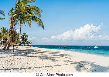 beautiful seascape with palms on a beach
