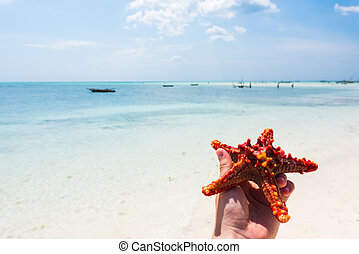 beautiful seascape with starfish on a shore