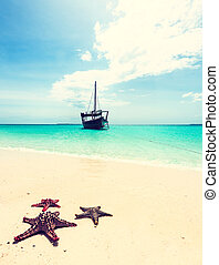 beautiful seascape with starfishes on a shore