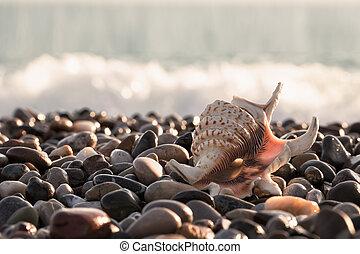 Beautiful seashell on the sea stony shore