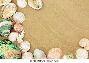 Beautiful Seashells on the Beach