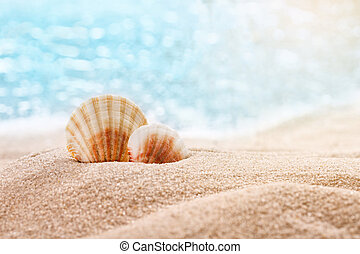 Beautiful seashells on the seashore with room for a product or advertising text. Blurred sea in the background.