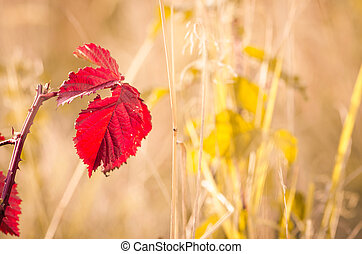 colorful autumn nature
