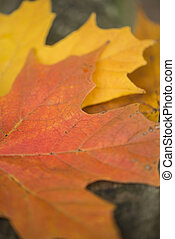 Beautiful shallow depth of field macro image of colorful Autumn Fall leaves in forest