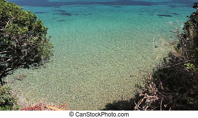 Beautiful shallow sea with vegetation around bay, pine trees...