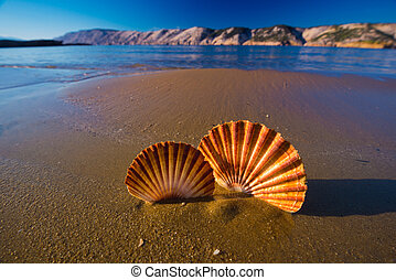Beautiful shells on the beach