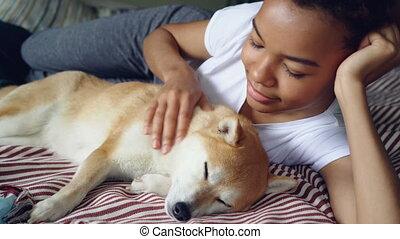 Beautiful shibe inu puppy enjoying love and care while its...
