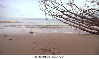 Beautiful shore of the beach with a trunk brought up from the sea