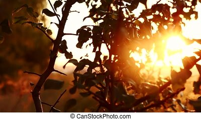 Beautiful shot of sunset flare coming through the leaves