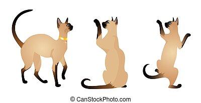 Beautiful Siamese cats