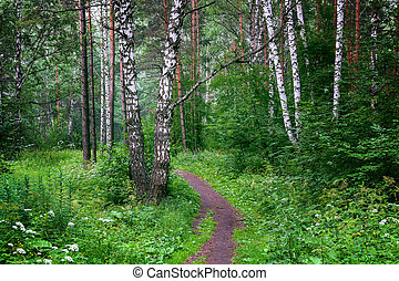 Beautiful Siberian forest
