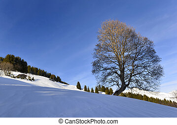 beautiful silhouette of a tree in snowy mountain