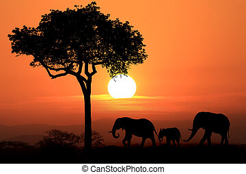 Beautiful Silhouette of African Elephants at Sunset