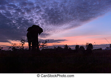 Beautiful silhouette of the elephant against an amazing sunset, Thailand
