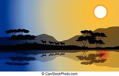 Beautiful silhouette of zebra in riverbank