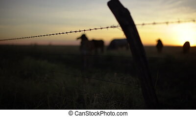 Beautiful silhouette shot of cows - Scenic silhouette shot...
