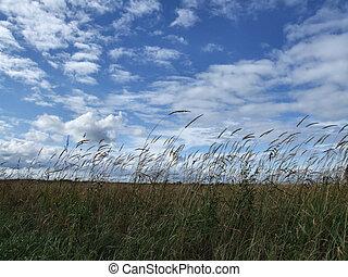 Beautiful sky and wild grass