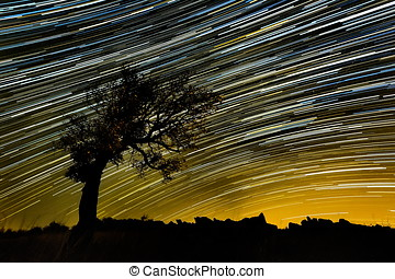 beautiful sky at night with startrails