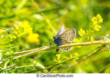 Beautiful sky blue butterfly on the meadow